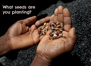 PDL supported the start of this seed bank. The seed bank has a committee who have a seed distribution before planting season. If a group member receives 14 cups of seeds they give back 16 cups of seed so the the seed bank can continue to grow. The system can continue on it's own but PDL still provides support so that the program can grow. There are currently 700 farmers from this community participating in this seed saving program. The seeds in this seed bank are beans, peanuts and corn. Inyon Gwoupman Peyizan Bay (IGPB) which is a partner of PDL Glasi Bourik, Central Plateau, Haiti. Photo by Ben Depp